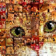Priyesh profile image